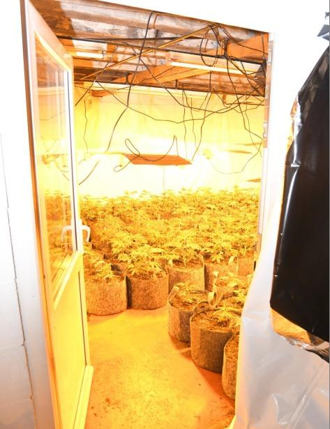 FIND: The cannabis factory discovered at Rosehill in Carlisle