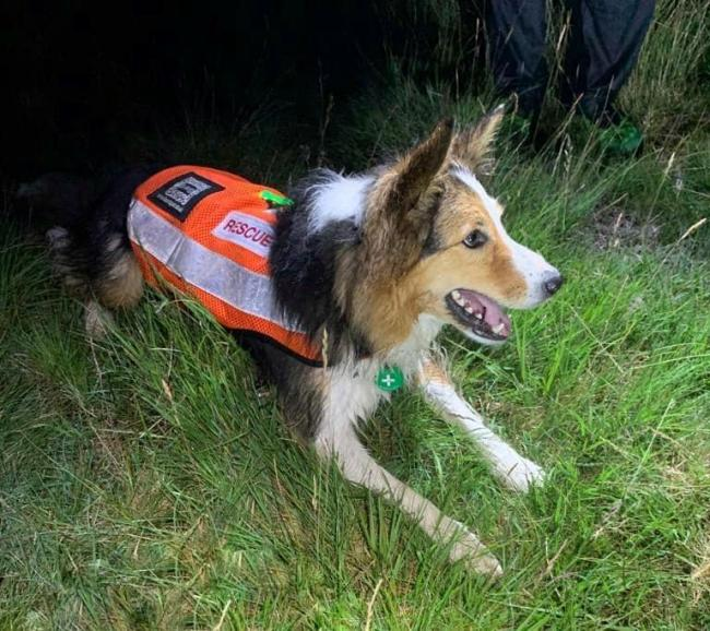 Search dog Jess was on hand to help in the rescue Picture: Wasdale Mountain Rescue